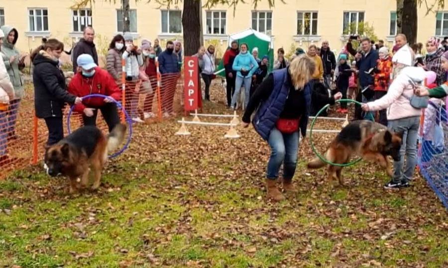 ВКоряжме нагородской набережной прошли соревнования «Спортивная планета собак»