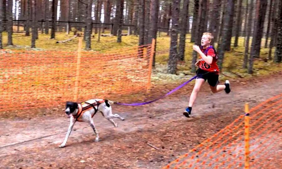 Под Коряжмой состоялись соревнования «Спортивная планета собак»